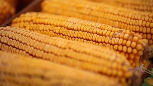 corn_11152018getty