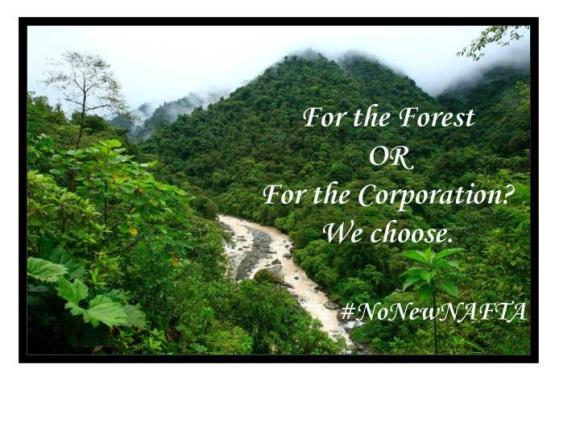 NAFTA-Forest-2